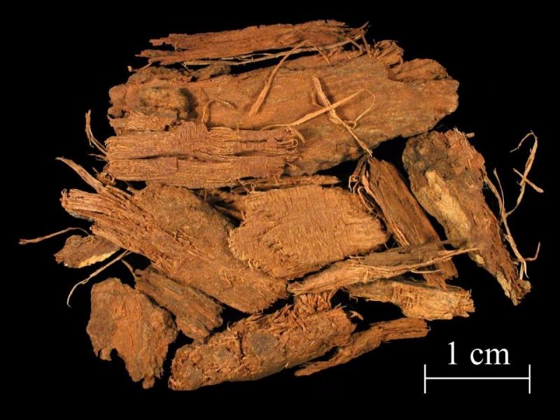 File:Quercitron bark pieces 1.jpg